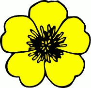 188x182 Cream Buttercup Flower Clip Art