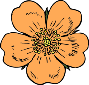 300x285 Peach Flower Clipart