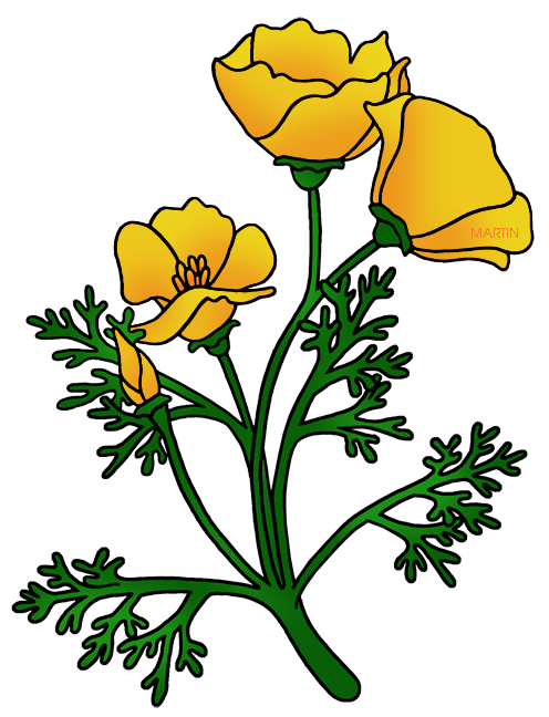 496x648 United States Clip Art By Phillip Martin, California State Flower