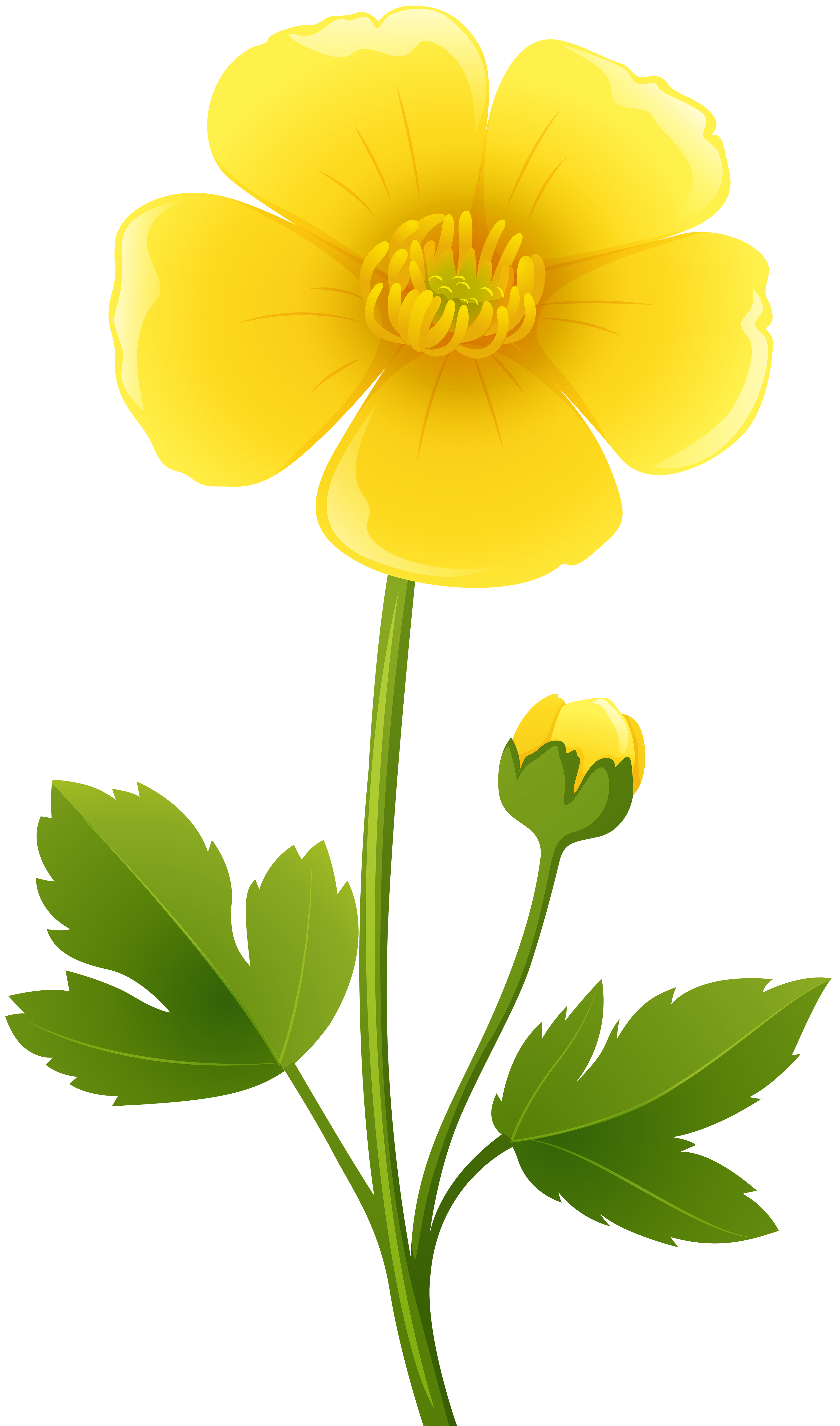 Buttercup flower clipart at getdrawings free for personal use 3492x5925 yellow flower transparent png clip art image buttercups mightylinksfo