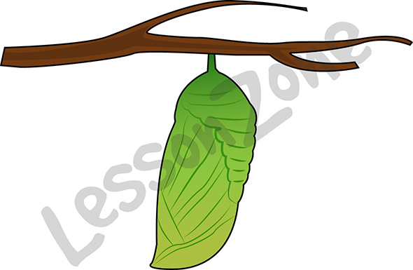 590x385 Butterfly Hungry Caterpillar Clipart Free Clip Art Images Pupa