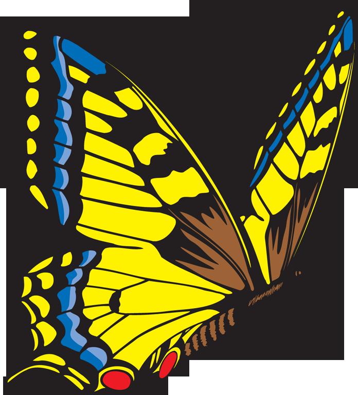 696x768 Yellow Butterfly Clipart Clipart Panda