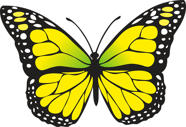 640x440 Butterfly Clipart Nice Coloring Pages For Kids