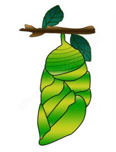 Butterfly Cocoon Clipart at GetDrawings.com | Free for ...