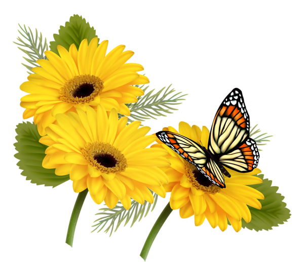 600x518 Yellow Gerberas With Butterfly Png Clipart Mutfak Dekopaj