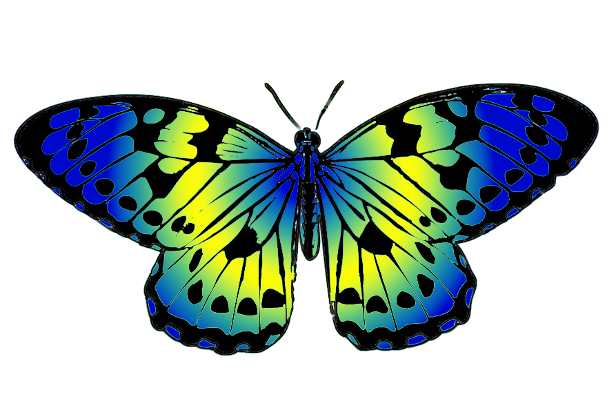 893x591 Butterfly Clipart Blue And Green