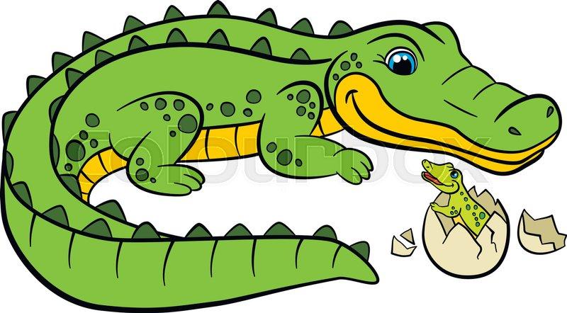 800x442 Caiman Clipart Baby Alligator 3118924