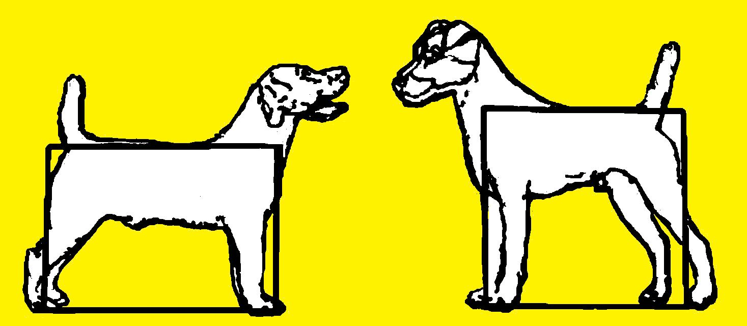 1467x640 Terrierman's Daily Dose The Russell Terrier A Contrived History