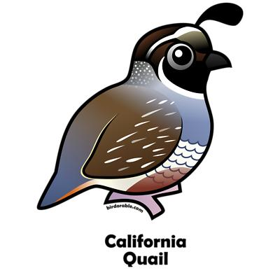 400x400 Collection Of Quail Clipart Images High Quality, Free