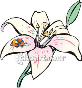 279x300 Clipart Lily Collection