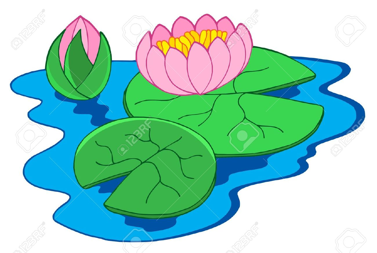 1300x873 Collection Of Pink Water Lily Clipart High Quality, Free