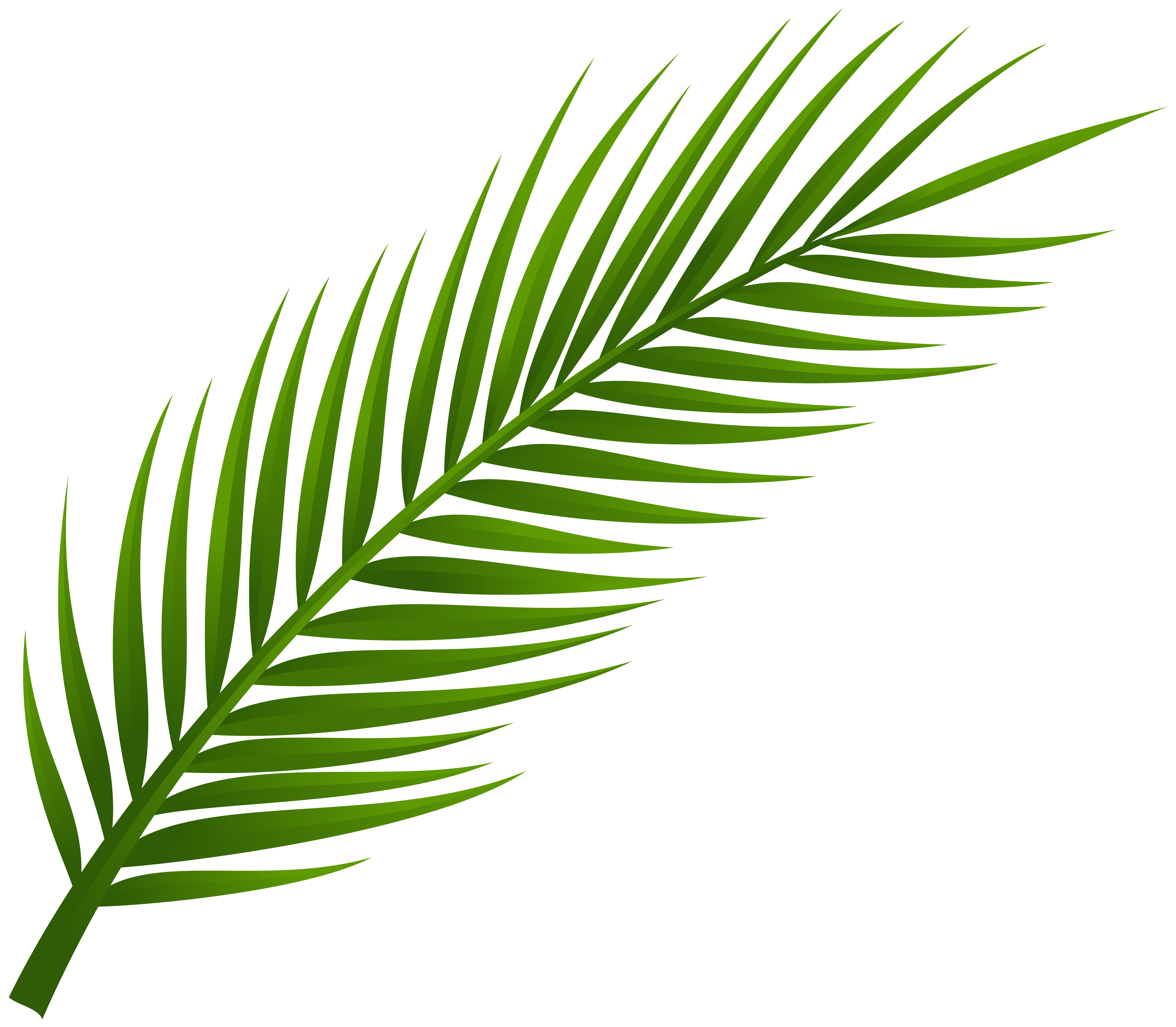 8000x6983 Palm Tree Leaves Clipart Leaf Png Clip Art Best Web