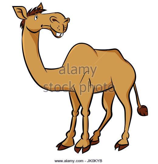 520x540 Camel Tail Stock Photos Amp Camel Tail Stock Images