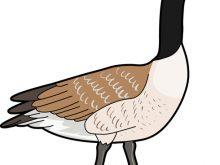220x165 Goose Clip Art Canada Goose Clipart Plant Clipart