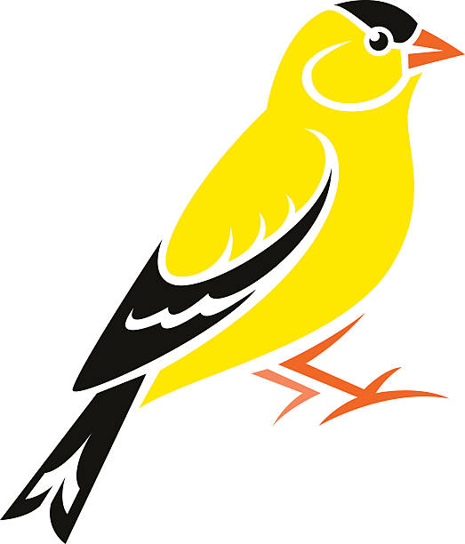 523x612 Golden Clipart Finch