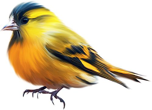 500x361 Beautiful Clipart Beautiful Bird