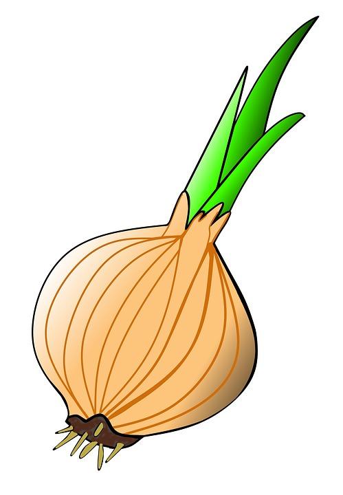 499x720 Onion Clipart Shallot