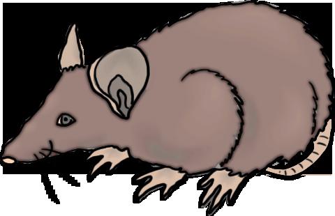 480x310 Rat Clipart Public Domain