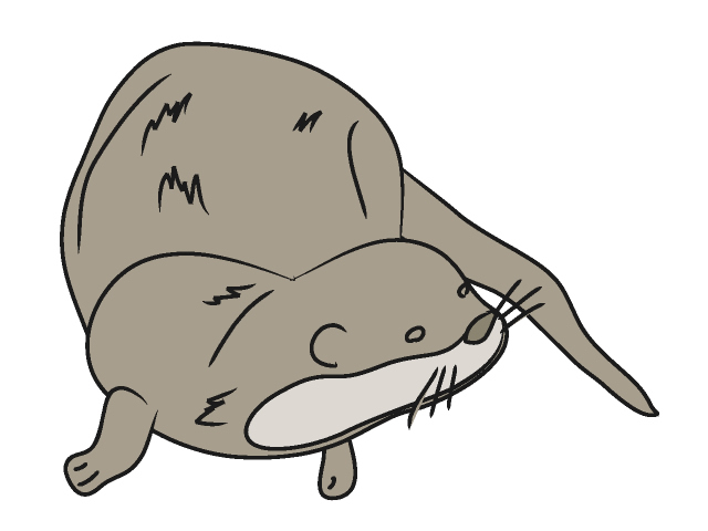 640x480 Top 97 Otter Clip Art