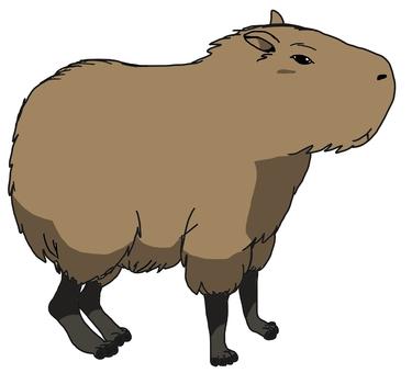 375x340 Capybara, 1