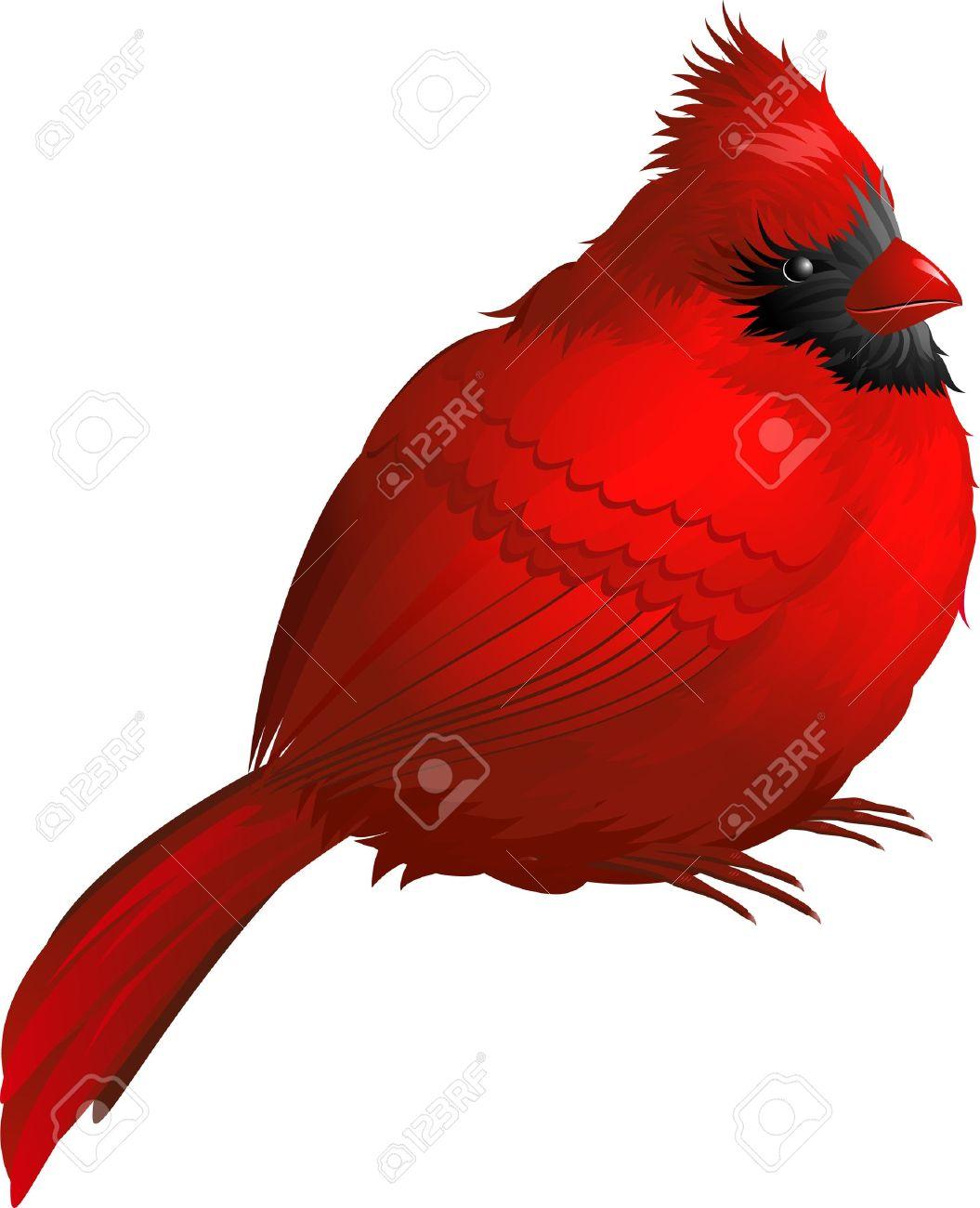 1055x1300 Cardinal Bird Clip Art Cliparts