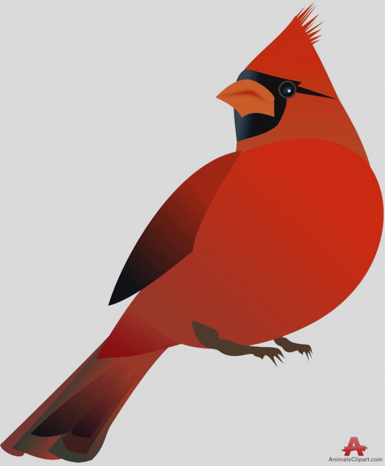 778x940 Trend Cardinal Clip Art Free Clipart Pictures Clipartix