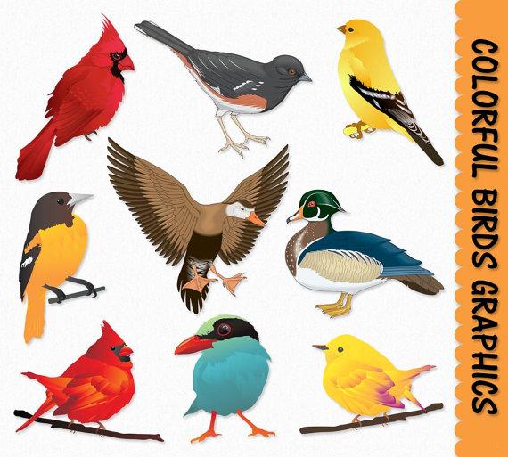 570x513 Birds Clip Art Graphics Bird Clipart Cardinal Duck Sparrow