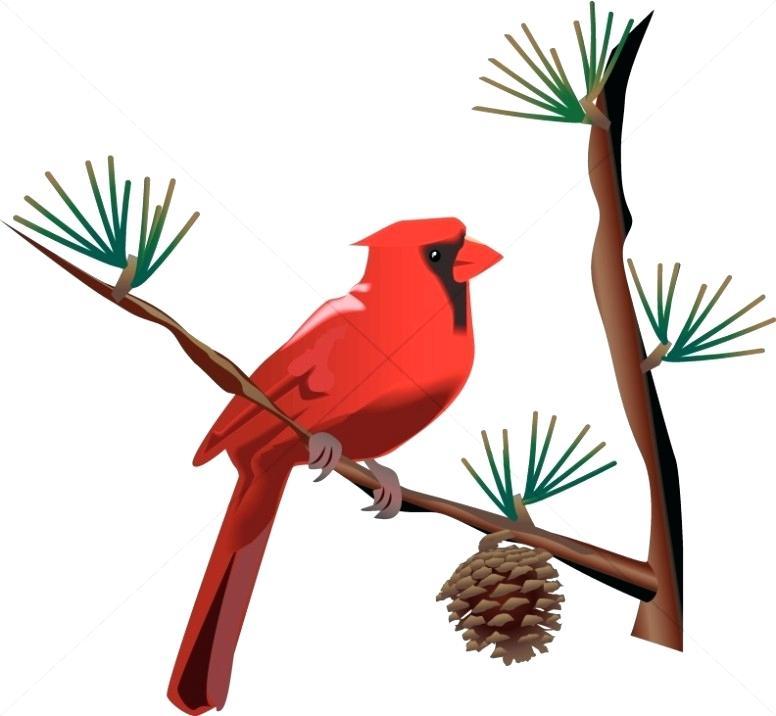 776x716 Wildlife Clip Art Red Cardinal On Branch Wildlife Clipart Free