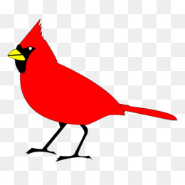 260x260 University Of Louisville Louisville Cardinals Men's Basketball