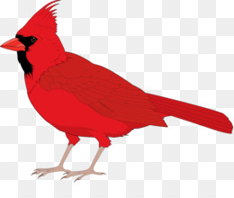 260x220 Northern Cardinal St. Louis Cardinals Clip Art