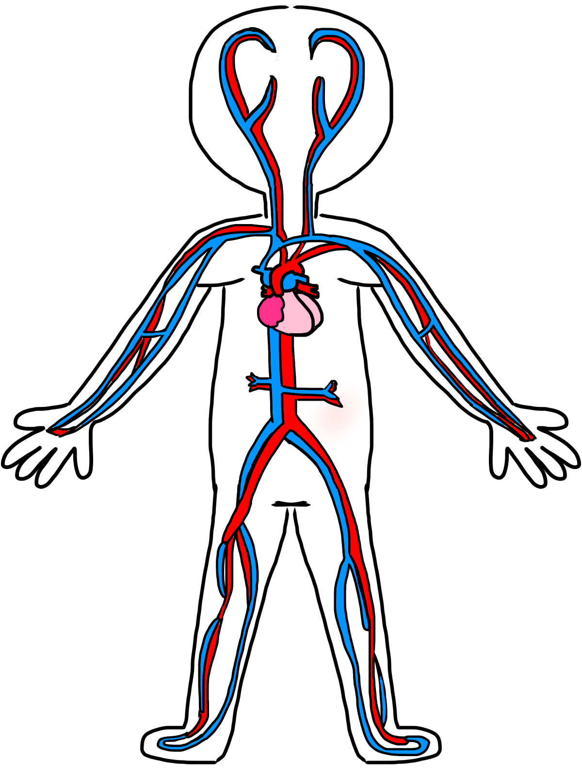 1200x1600 16 Circulatory System Drawing Kids Free Cliparts That You Can