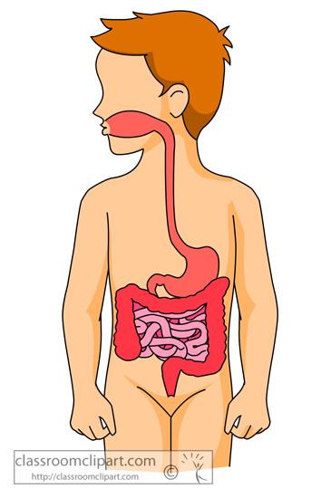 365x550 Human Digestive System Clipart