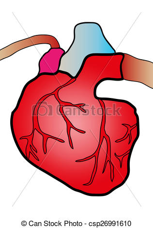 316x470 Cardiac System. Illustration Of A Heart Cut In Clipart