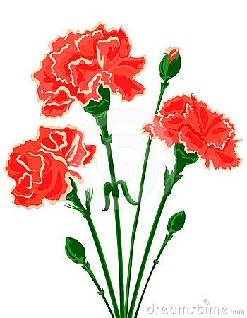 350x450 Red Carnation Clipart Carnation Flower Clip Axo Reunion
