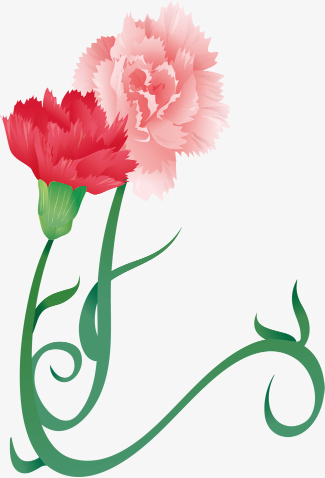 650x955 Carnation Png Vector Material, Carnations, Flowers, Hand Painted