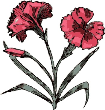 351x368 Carnations Vector Free Vector Download (18 Free Vector)