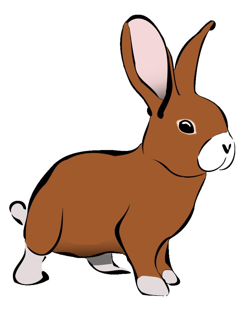 800x1041 Easter Bunny Rabbit Cartoon Clip Art Cute Png Unusual Bunnies