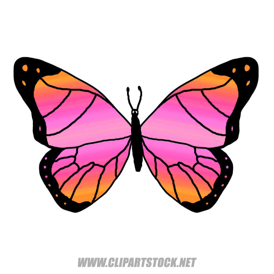 905x905 Colorful Butterfly And Flower Clip Art 7607272