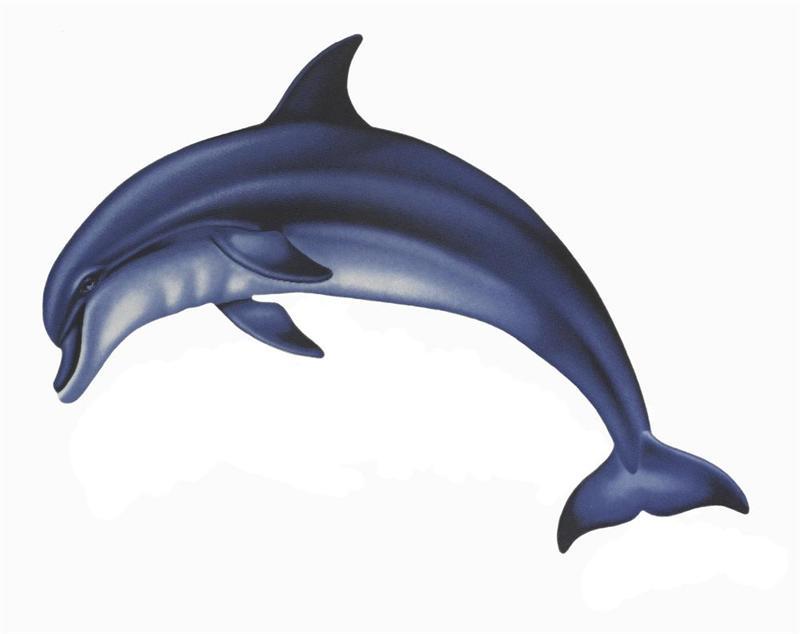 800x634 Bottlenose Dolphin Clipart Clipart Panda