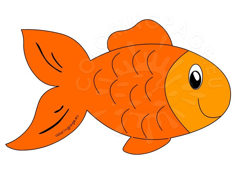 808x595 Fish Pics Clipart Simplistic Orange Fish Clipart 36 For Your