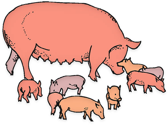 589x440 28 Collection Of Pig And Piglet Clipart High Quality Free