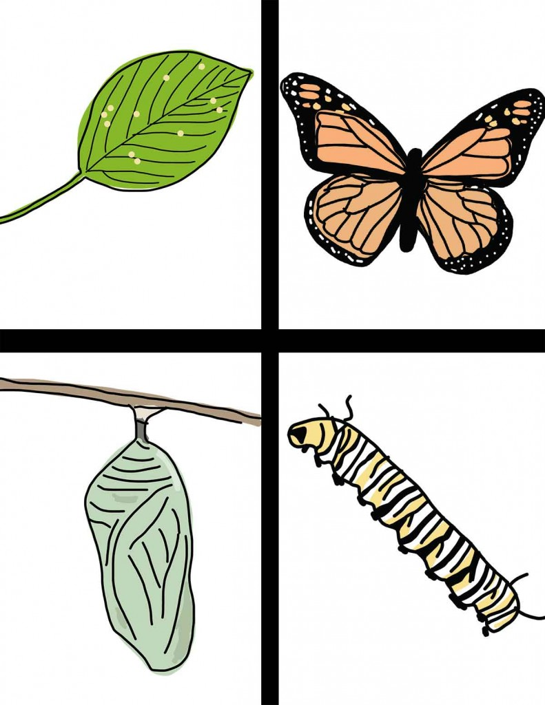 791x1024 Life Cycle Of The Butterfly Hand Drawn Clipart