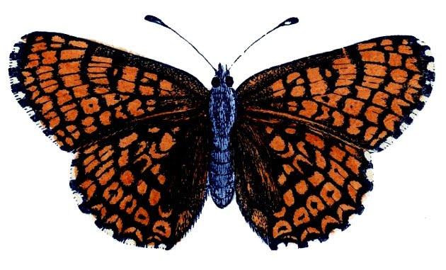 630x381 Natural History Clip Art