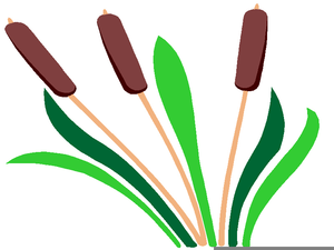 300x225 Cattails Clipart Free Images
