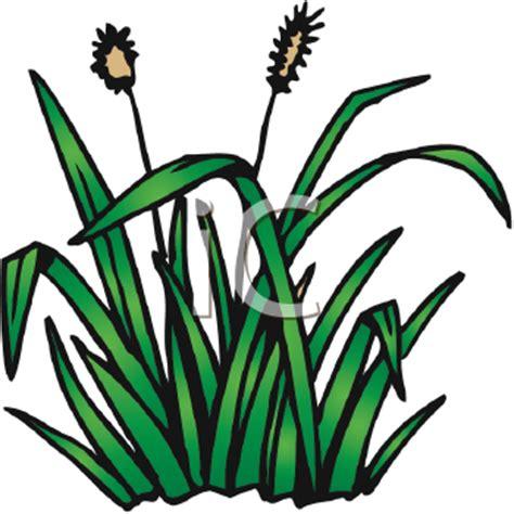 474x474 Royalty Free Cattail Clip Art, Plant Clipart, Cartoon Pond