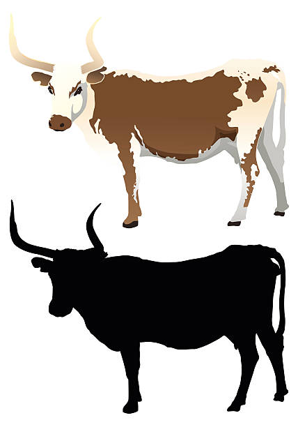 428x612 Collection Of Longhorn Cattle Clipart High Quality, Free