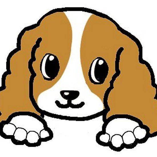 550x550 91 Best Cavalier King Charles Spaniel Images On A Dog
