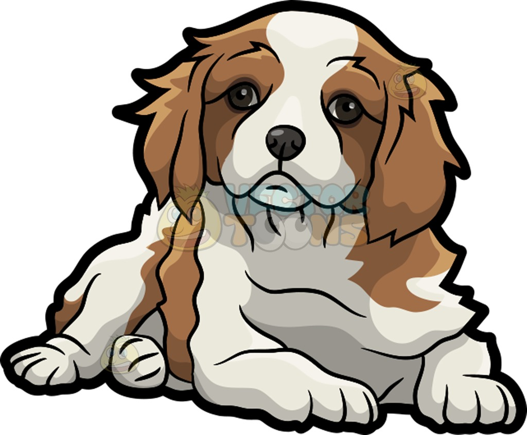 1024x846 A Pretty And Adorable Cavalier King Charles Spaniel Pet Dog