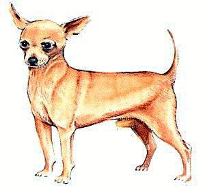 300x278 Free Chihuahua Clipart