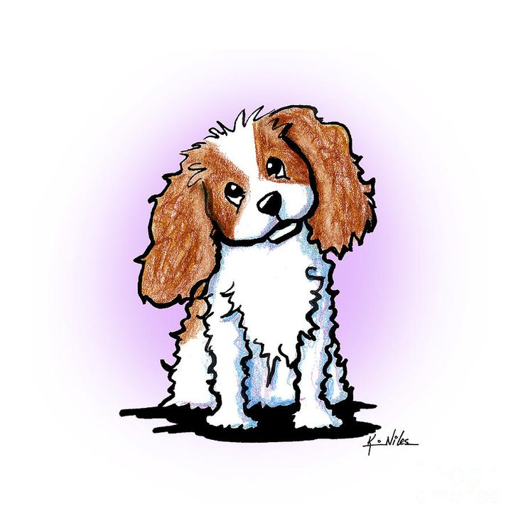 736x736 975 Best Cavalier Images On Cavalier King Charles